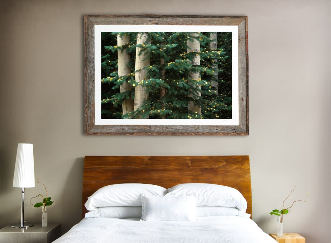 Framed print of Aspen and Evergreen hanging on wall.