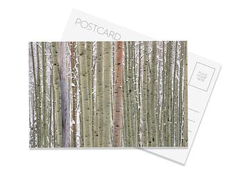 Ilium Postcard