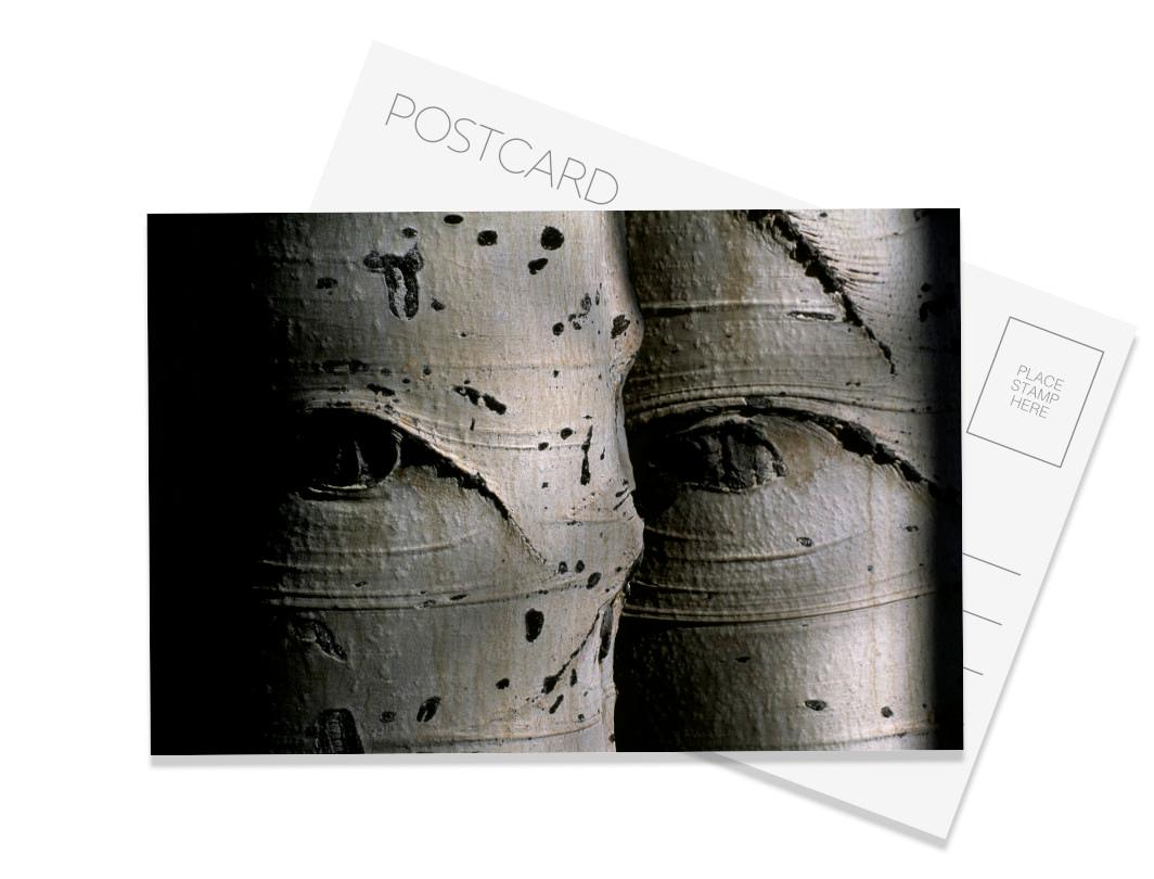 Aspen Eyes Postcard