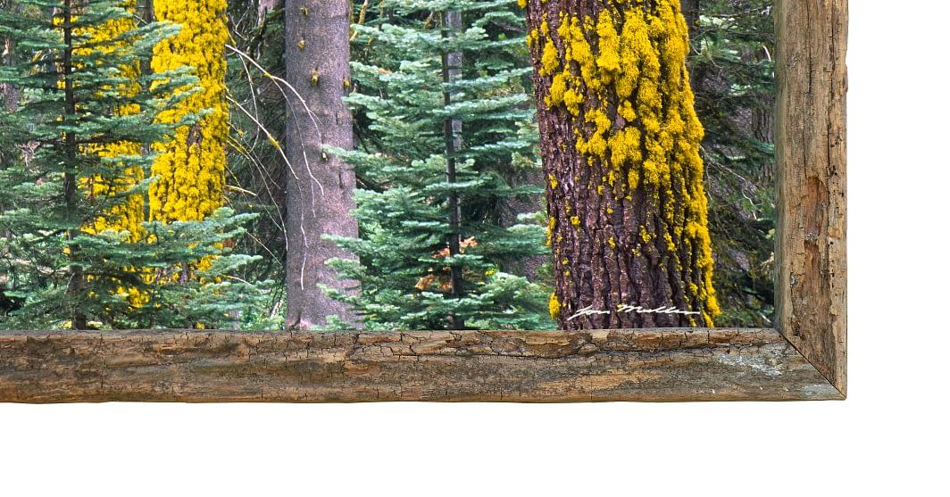Sliver of Sequoia - Detail