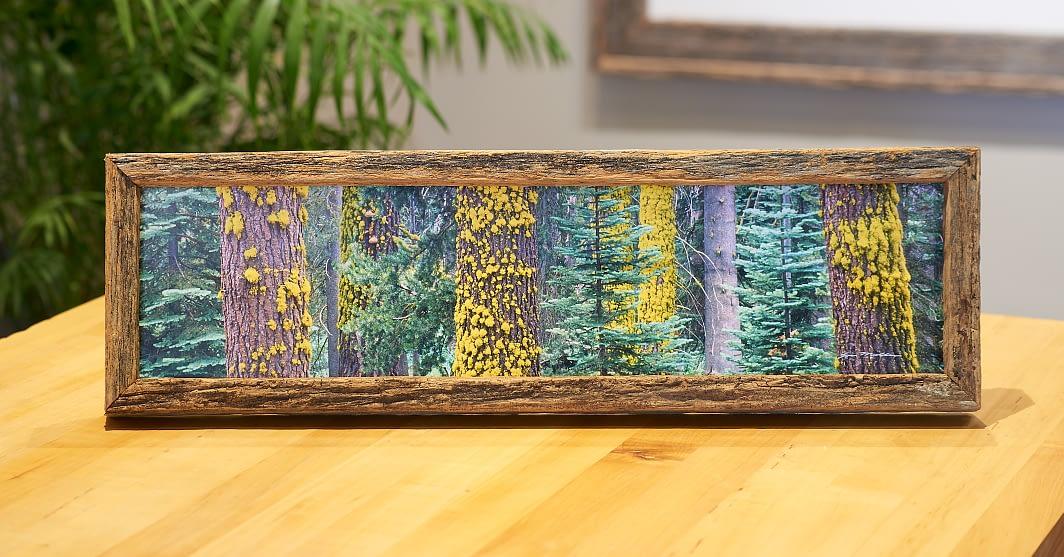 Sliver of Sequoia on Desktop