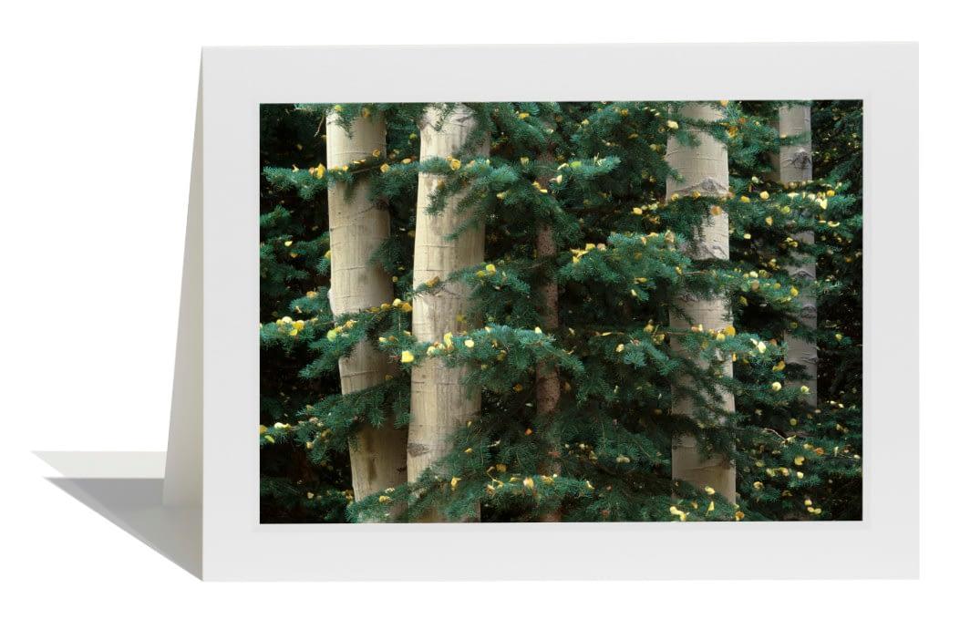 Aspen and Evergreen Card