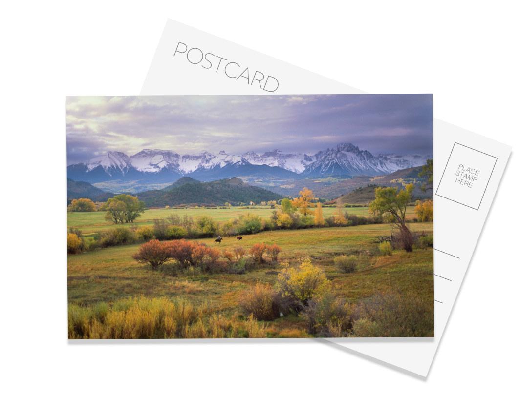 Roundup Postcard