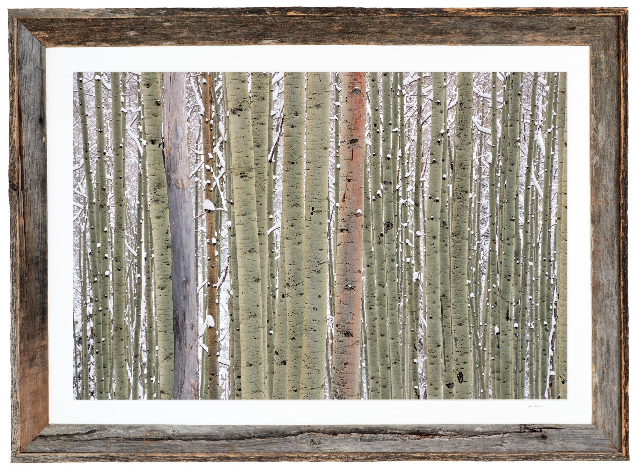 Ilium - Framed
