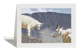 Mountain Goats Card