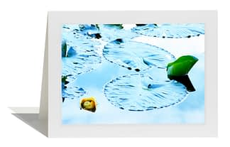 Yellow Pond Lily Card