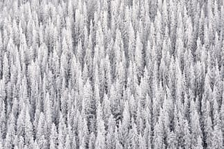 Winter's Blanket
