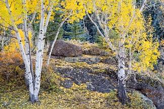 Aspen Grove II