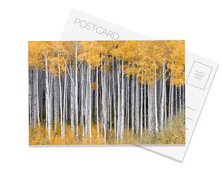 Aspen Grove Postcard