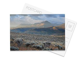 Sea of Sage Postcard