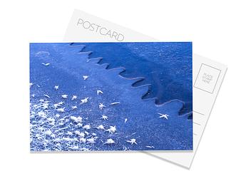 Surface Hoar Postcard